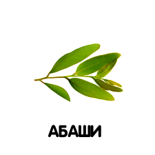 Абаши
